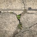 Repair or Replace? How to Decide Which Is Best for Your Concrete